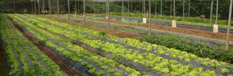 Fazenda do Glória
