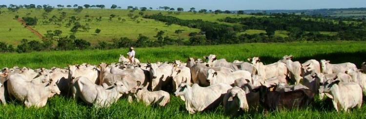 Fundação de Desenvolvimento Agropecuário - FUNDAP